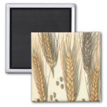 Vintage Agriculture, Drought Resistant Wheat Plant Refrigerator Magnet