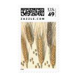 Vintage Agriculture, Drought Resistant Wheat Plant Postage Stamps