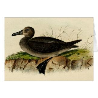 Vintage Albatross Card