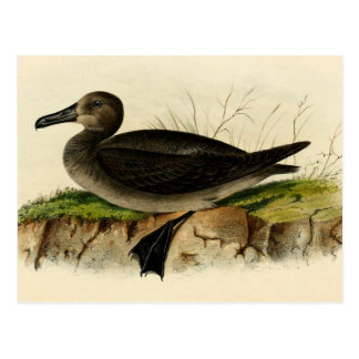 Vintage Albatross Postcard