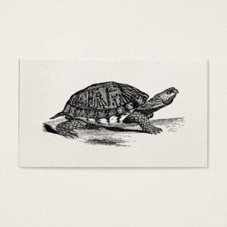 Vintage American Box Tortoise - Turtle Template Business Card
