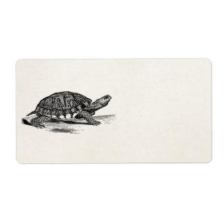 Vintage American Box Tortoise - Turtle Template Label