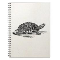 Vintage American Box Tortoise - Turtle Template Notebook