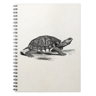 Vintage American Box Tortoise - Turtle Template Spiral Notebook