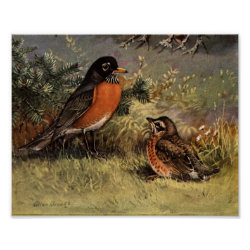 Matte Poster with Brooks' American Robins design