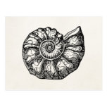 Vintage Ammonite Seashell Fossil Shell Template Post Card