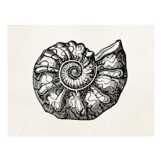 Vintage Ammonite Seashell Fossil Shell Template Postcard
