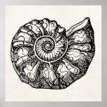 Vintage Ammonite Seashell Fossil Shell Template Poster