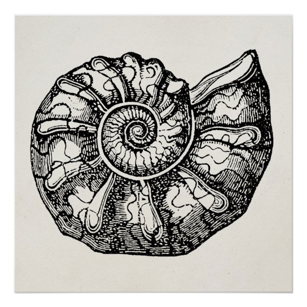 seashell templates