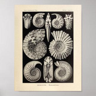 Vintage Ammonitida Color Ernst Haeckel Art Print