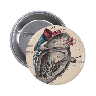 Vintage Anatomical Heart Pinback Buttons