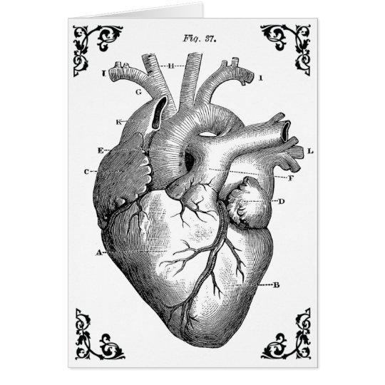 Vintage Anatomical Heart Diagram Gothic Card Zazzle