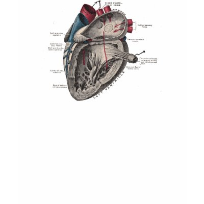 Heart Diagram Black And White. Vintage Anatomical Heart