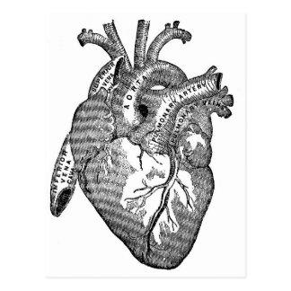 Vintage Anatomical Heart Postcard