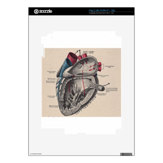 Vintage Anatomical Heart Skin For The iPad 2