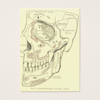 Vintage Anatomy Anterolateral region of the skull Business Card