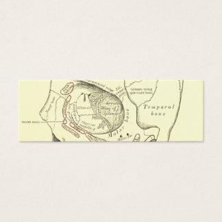 Vintage Anatomy Anterolateral region of the skull Mini Business Card