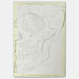 Vintage Anatomy Anterolateral region of the skull Post-it® Notes
