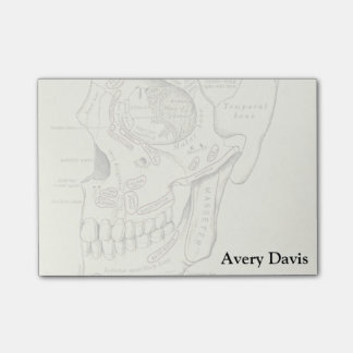 Vintage Anatomy Anterolateral region of the skull Post-it Notes