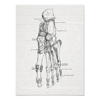 Vintage Anatomy Art Bones of the Foot Poster