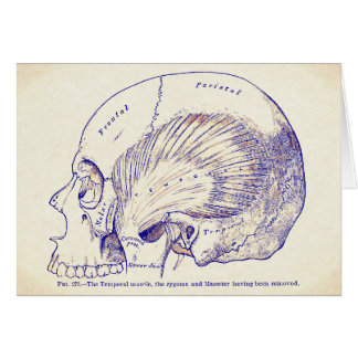 Vintage Anatomy Art Human Temporal Muscle Card