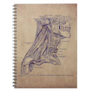 Vintage Anatomy Art Muscles of the Neck Old Paper Notebook