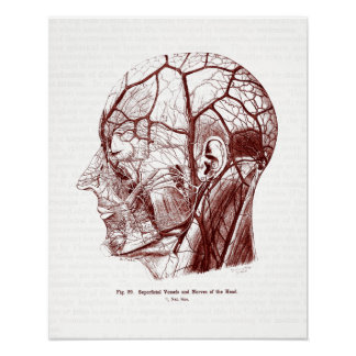 Vintage Anatomy Art Nerves of the Human Head Poster
