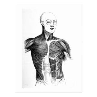 Vintage Anatomy | B/W Torso  (circa 1852) Postcard