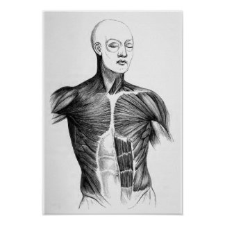 Vintage Anatomy   B/W Torso  (circa 1852) Poster