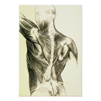 Vintage Anatomy   Back Muscles (circa 1852) Poster