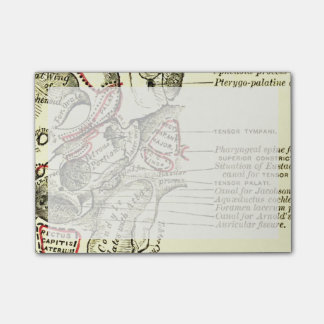 Vintage Anatomy Base of the skull external Post-it® Notes