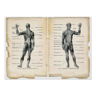 Vintage Anatomy Book Pages Poster