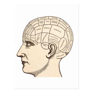 Vintage Anatomy Brain Map Image Postcards