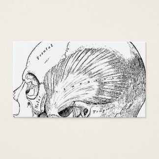 Vintage Anatomy Drawing Human Temporal Muscle Business Card