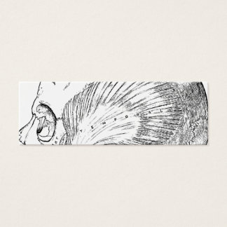 Vintage Anatomy Drawing Human Temporal Muscle Mini Business Card