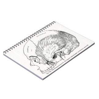 Vintage Anatomy Drawing Human Temporal Muscle Notebook