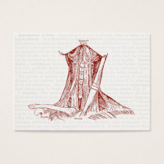 Vintage Anatomy Drawing Muscles Of The Neck Business Card