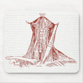 Vintage Anatomy Drawing Muscles Of The Neck Mouse Pad