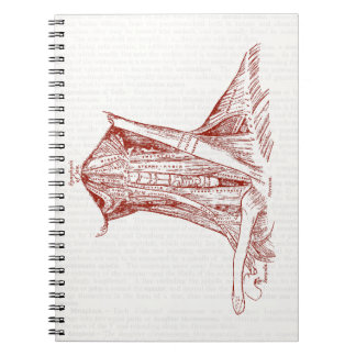 Vintage Anatomy Drawing Muscles Of The Neck Notebook