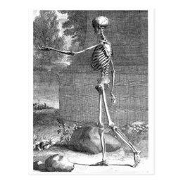 Vintage anatomy drawing, side view, skeleton postcard