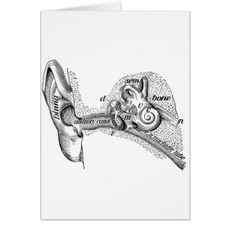 Vintage Anatomy Ear Drum Ear Canal Diagram Card
