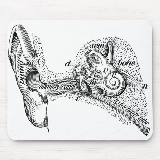 Vintage Anatomy Ear Drum Ear Canal Diagram Mouse Pad Zazzle