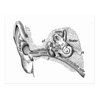 Vintage Anatomy Ear Drum Ear Canal Diagram Postcard