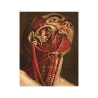 Vintage Anatomy   Head and Neck Canvas Print