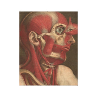 Vintage Anatomy   Head, Neck, and Shoulders Canvas Print