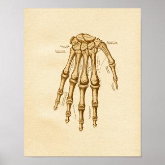 Vintage Anatomy Illustration Hand Wrist Bones Poster