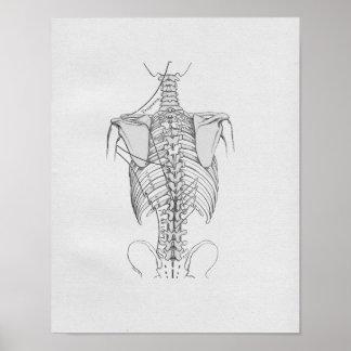Vintage Anatomy Illustration Spine Poster