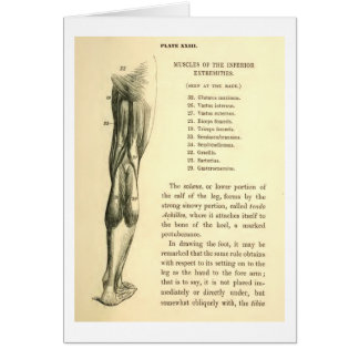 Vintage Anatomy | Leg Muscles Stationery Note Card