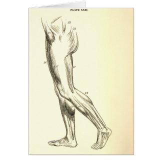 Vintage Anatomy | Leg Muscles II (ca. 1852) Greeting Card