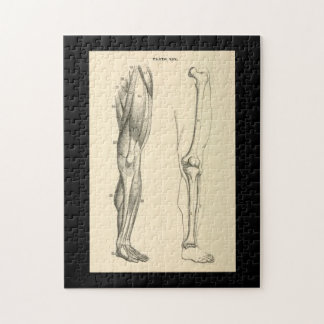 Vintage Anatomy |   Muscles and Bones of the Leg Jigsaw Puzzle